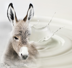donkey milk benefits